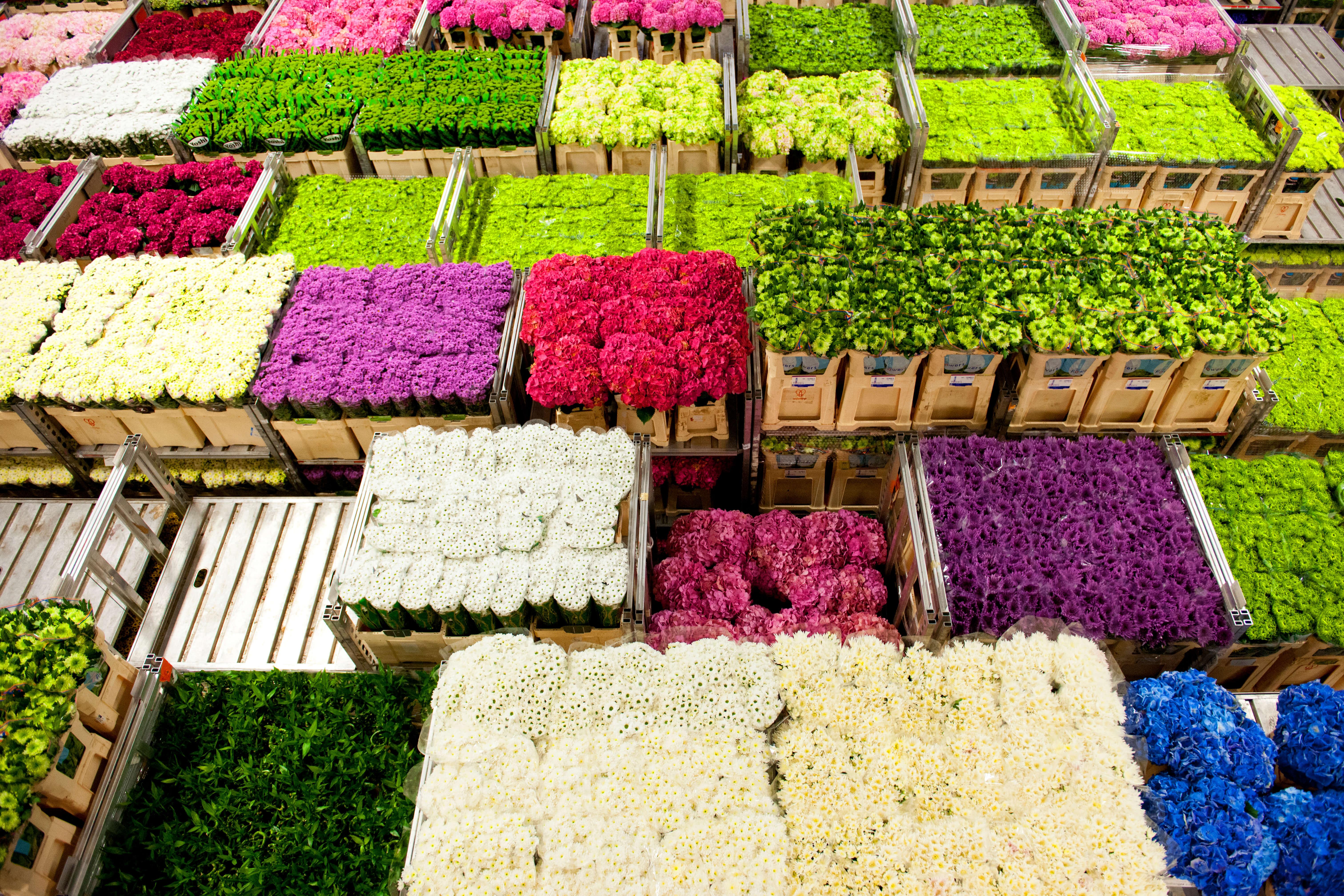 Bloemen in Aalsmeer