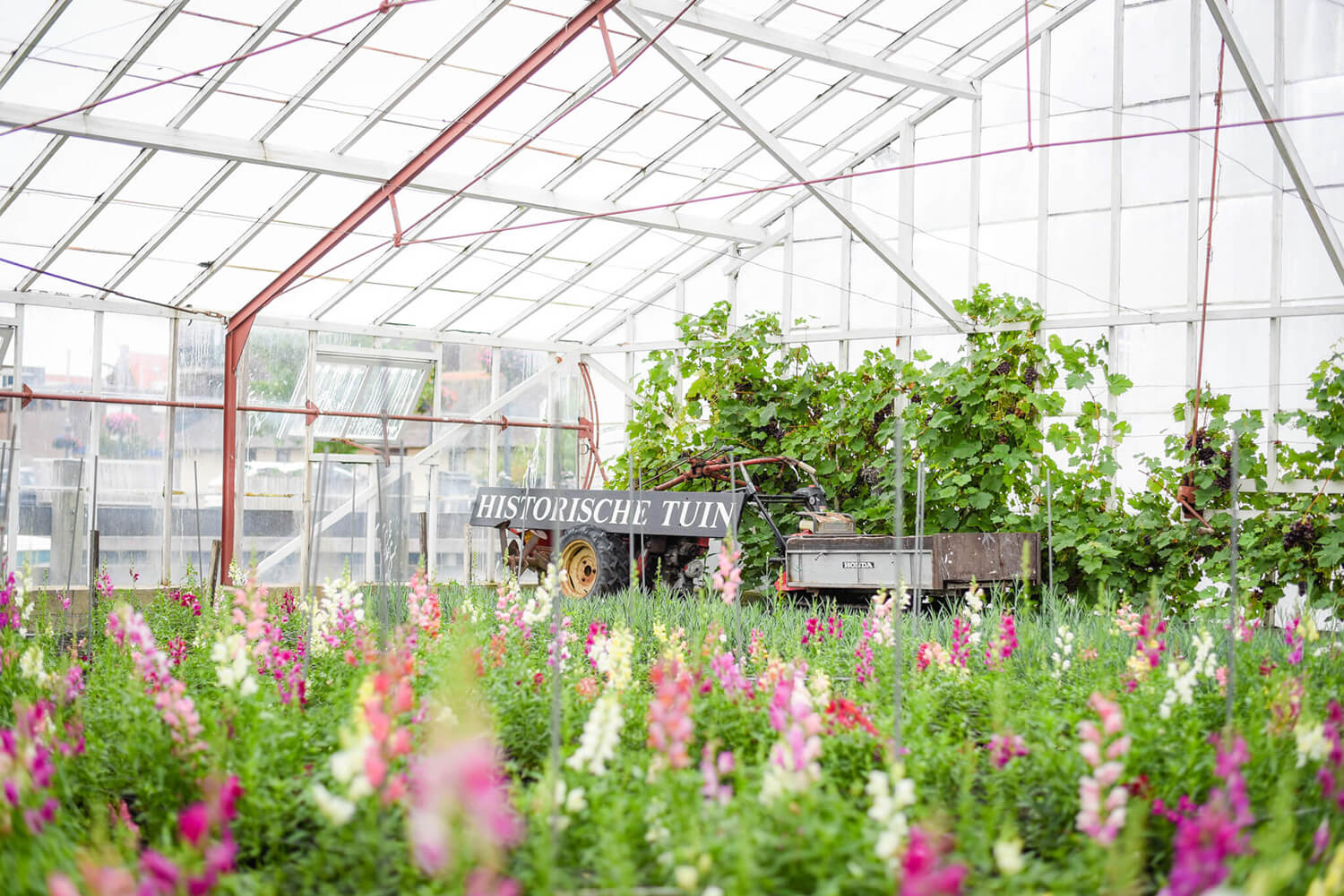 Things to do with flowers in Aalsmeer